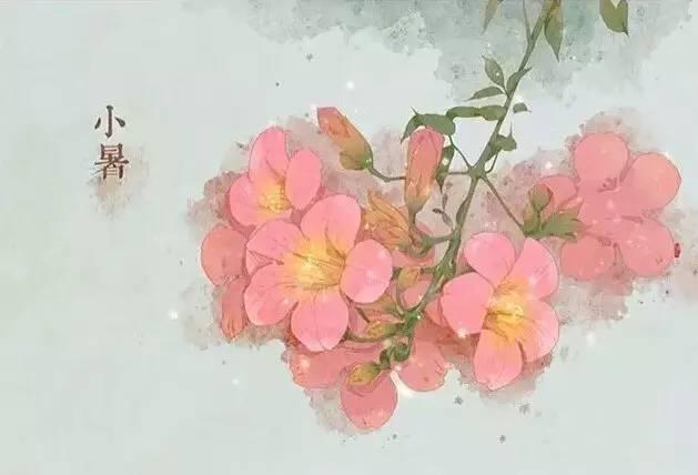 24节气·专属花卉植物,四季芳香!_11