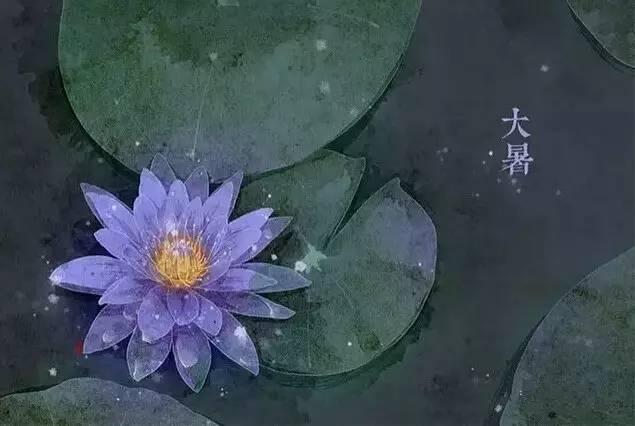 24节气·专属花卉植物,四季芳香!_12