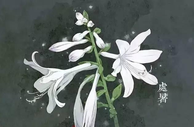 24节气·专属花卉植物,四季芳香!_14
