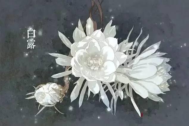 24节气·专属花卉植物,四季芳香!_15