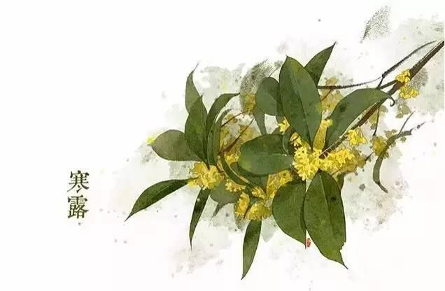 24节气·专属花卉植物,四季芳香!_17