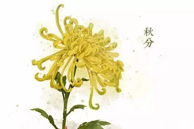 24节气·专属花卉植物,四季芳香!_16