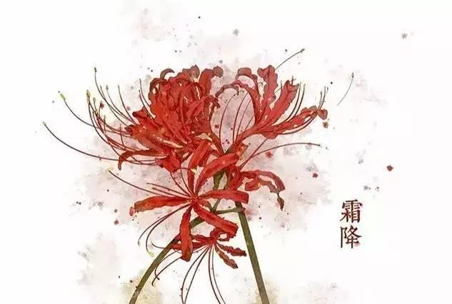 24节气·专属花卉植物,四季芳香!_18