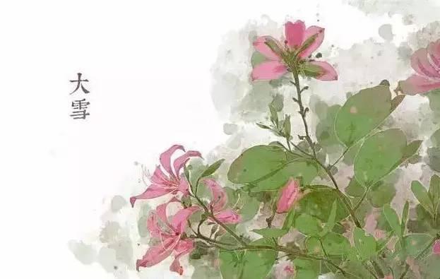 24节气·专属花卉植物,四季芳香!_21