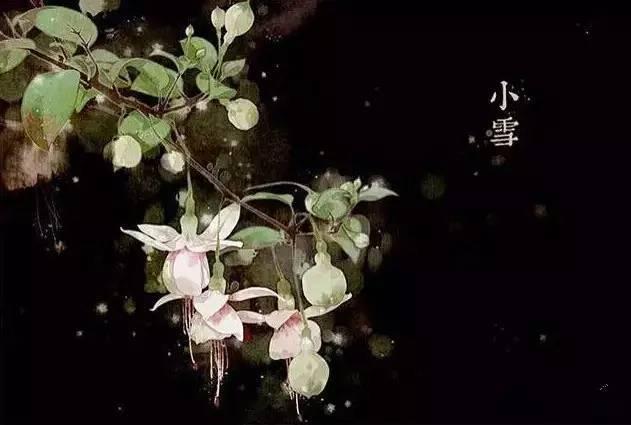 24节气·专属花卉植物,四季芳香!_20