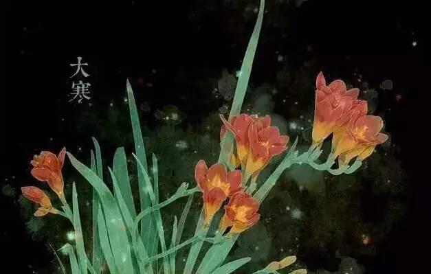 24节气·专属花卉植物,四季芳香!_24