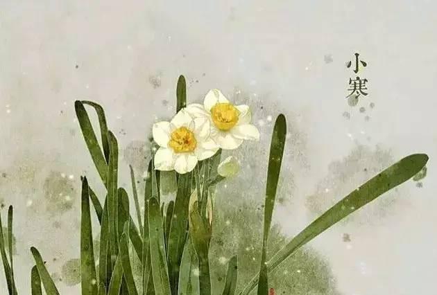 24节气·专属花卉植物,四季芳香!_23