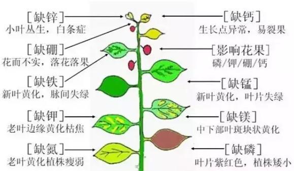超全植物肥料知识,建议收藏!_1