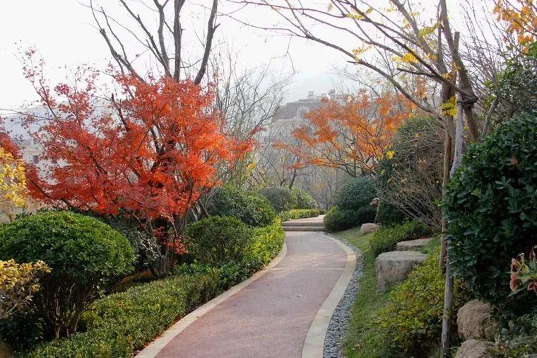 值得收藏的居住区景观植物配置方法!_16