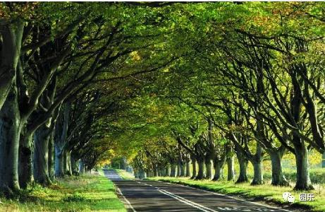 树阵景观的植物配置要点_1
