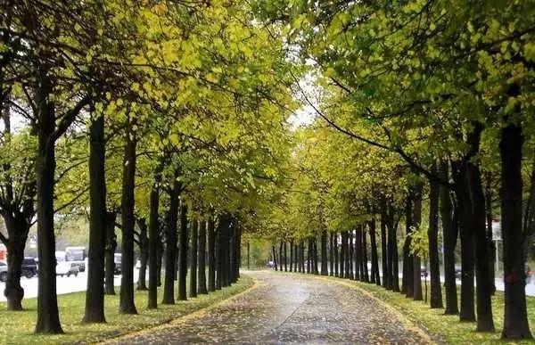 树阵景观的植物配置要点_2