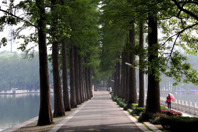 树阵景观的植物配置要点_4