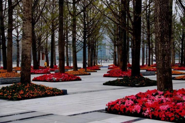 树阵景观的植物配置要点_6