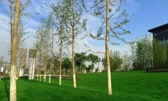 树阵景观的植物配置要点_7