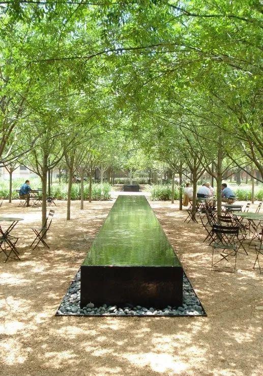 树阵景观的植物配置要点_11