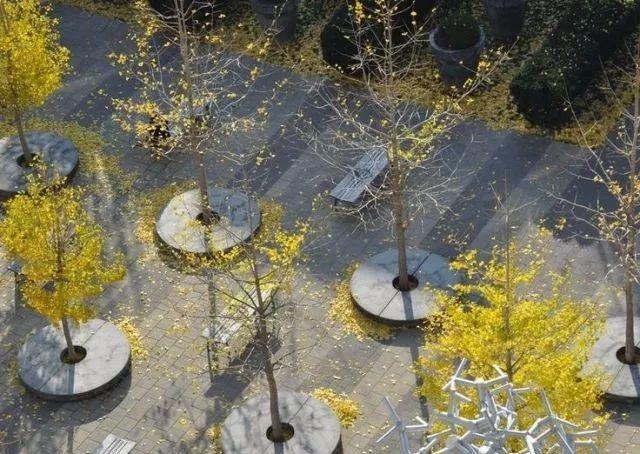 树阵景观的植物配置要点_14