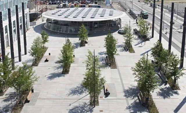树阵景观的植物配置要点_16