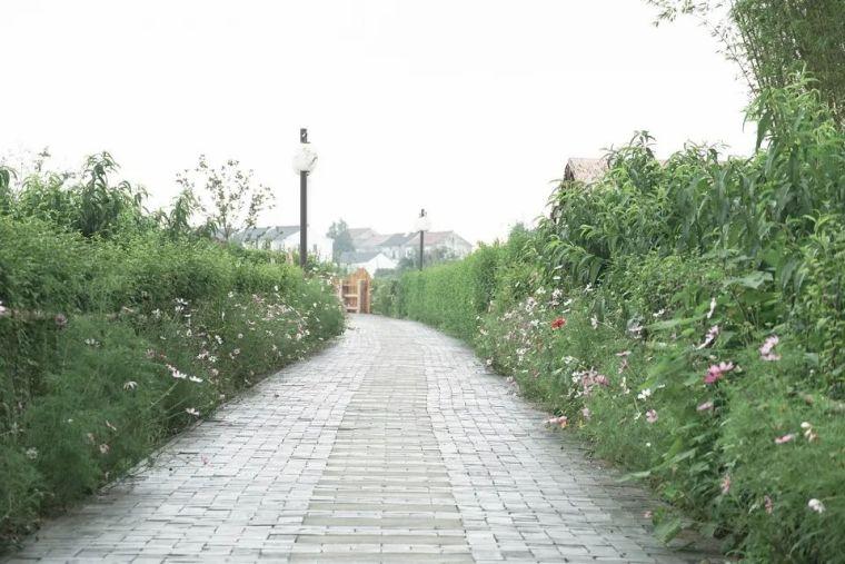 艺术点亮的乡村振兴_30