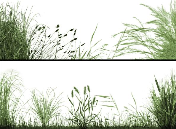 实用景观植物类笔刷合集-草类笔刷PSD_4