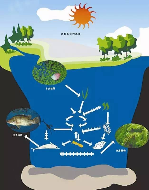 干货:河道景观方案设计全流程详解_16