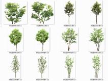178个拼贴真实风景观树木素材