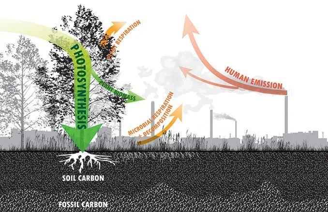 碳中和视角下的景观设计思维与应用_5