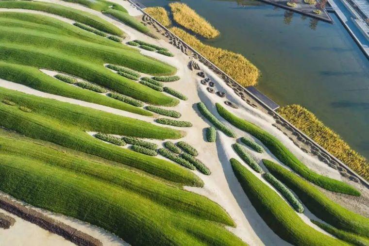 你的植物配置再厉害,又认识几种草坪草呢?_72