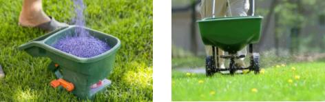 你的植物配置再厉害,又认识几种草坪草呢?_13