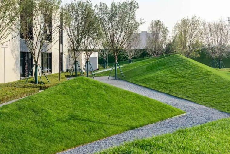 你的植物配置再厉害,又认识几种草坪草呢?_35