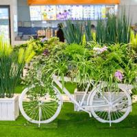 景观植物案例_园林景观图片