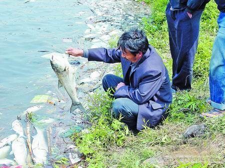 洛阳一水库数万鱼儿死亡 疑为上游排污所致