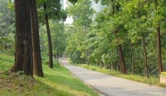 """阳江被命名为""""广东省园林城市"""""""