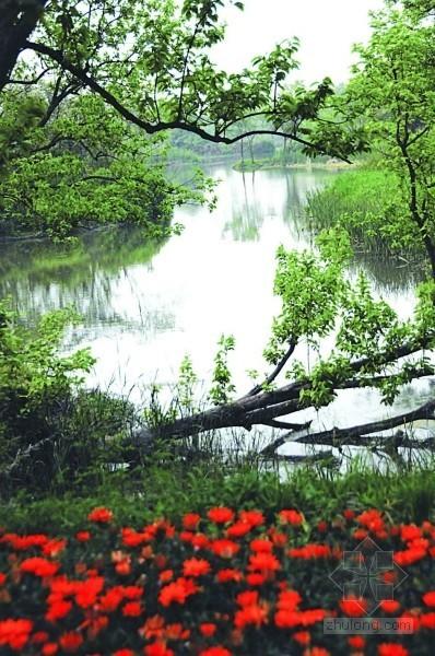 杭州西溪湿地:幽静中释压