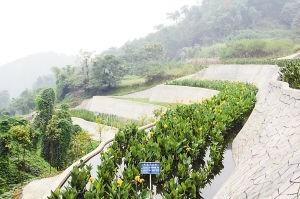 沙坪坝建人工生态湿地进行污水处理