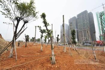 一棵小树苗牵出一起园林工程腐败窝案