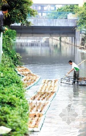 晋江投放生态浮岛 内河上建绿化景观带