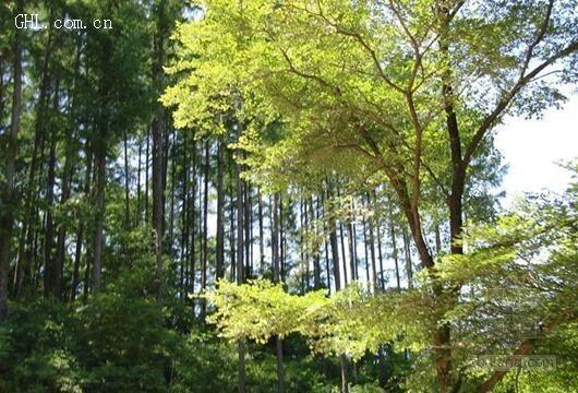 廊坊市春季新增造林绿化209公里