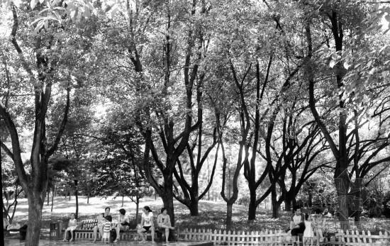 金华市今年申报国家园林城市