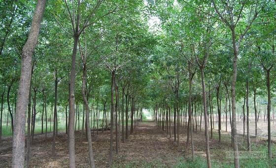 山东德州市生产绿地建设达到国家园林城市标准