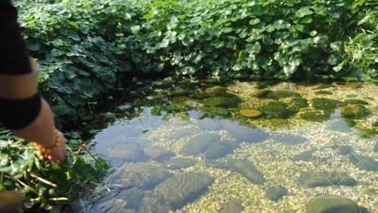 南充利用人工湿地推广处理污水