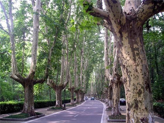 大连开展道路整治工程 主干道将形成法桐大街景观