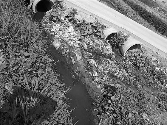 两公里河道内被污水蔓延