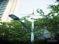 广州翰景路一盏路灯耗资3.6万元 高价买来鸡肋