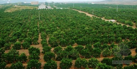"""解读广西富川农业转方式如何""""水到渠成"""""""