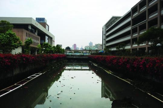 东莞学校旁河涌臭4年师生需戴口罩上课