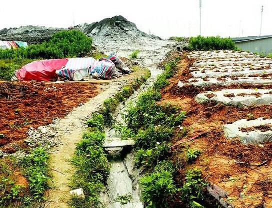 武汉沙湖港投资数亿建成 沦为污水排放渠