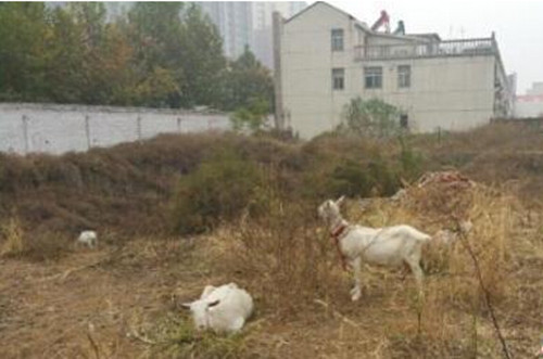 废弃大楼内养动物