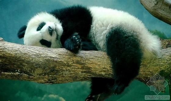 成都将建大熊猫国家公园 规划1616平方公里!
