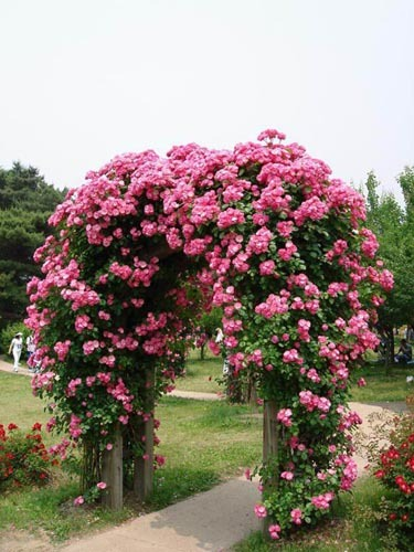 享受别墅生活从装修开始-欧式蔷薇拱门的制作