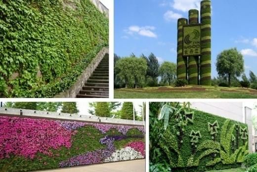 浅谈墙面绿化的种植方式